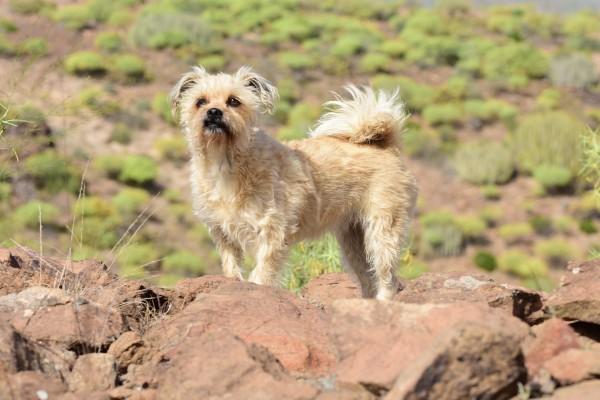 dog-2173529_1920-Angela-Faryes-auf-Pixabay
