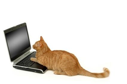 Katze-und-Computer