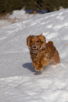 Schneegastritis beim Hund