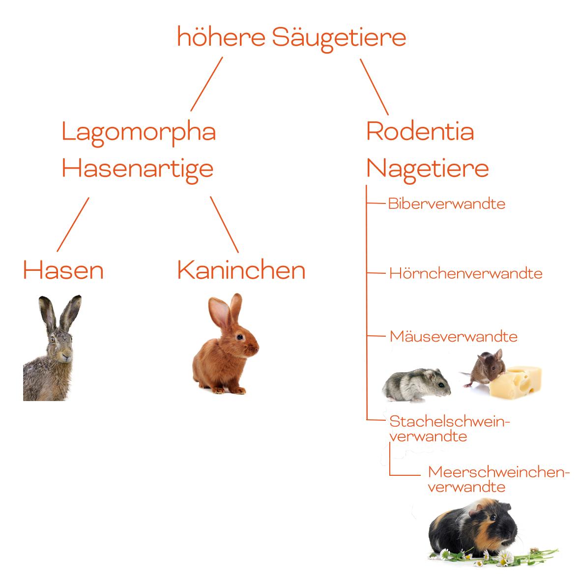 Kaninchen, Meerschweinchen & Nager | Heimtiere | Wissen