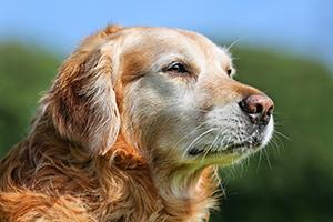 Seniorenfütterung Hund