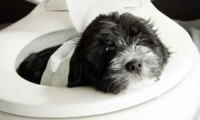 Hund-im-WC_istock_web