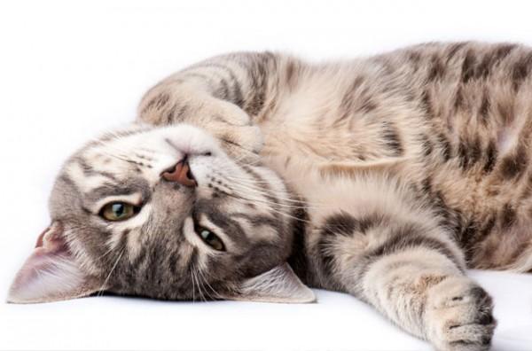 Katze-f-r-Newsletter